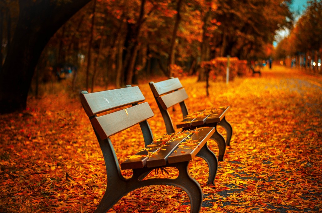 Fall Foliage In Park With Park Bench