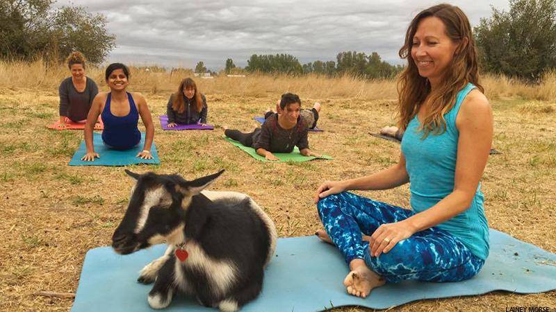 Goat Yoga | Natura Wines