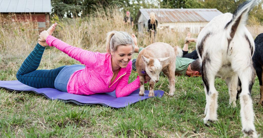Goat Yoga | Sustainable Wines | Natura