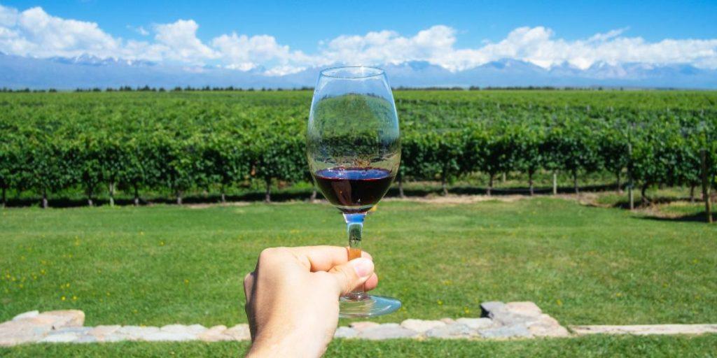 Characteristics of cabernet sauvignon wine | Organic cabernet sauvignon | Natura Wines of Chile