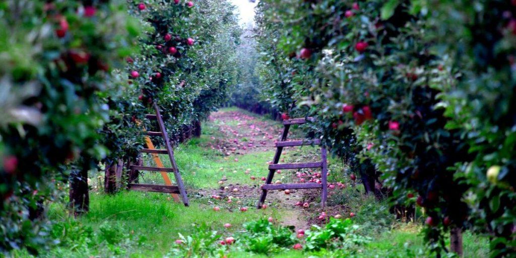October harvest crops | Wine pairings list | Natura Wines