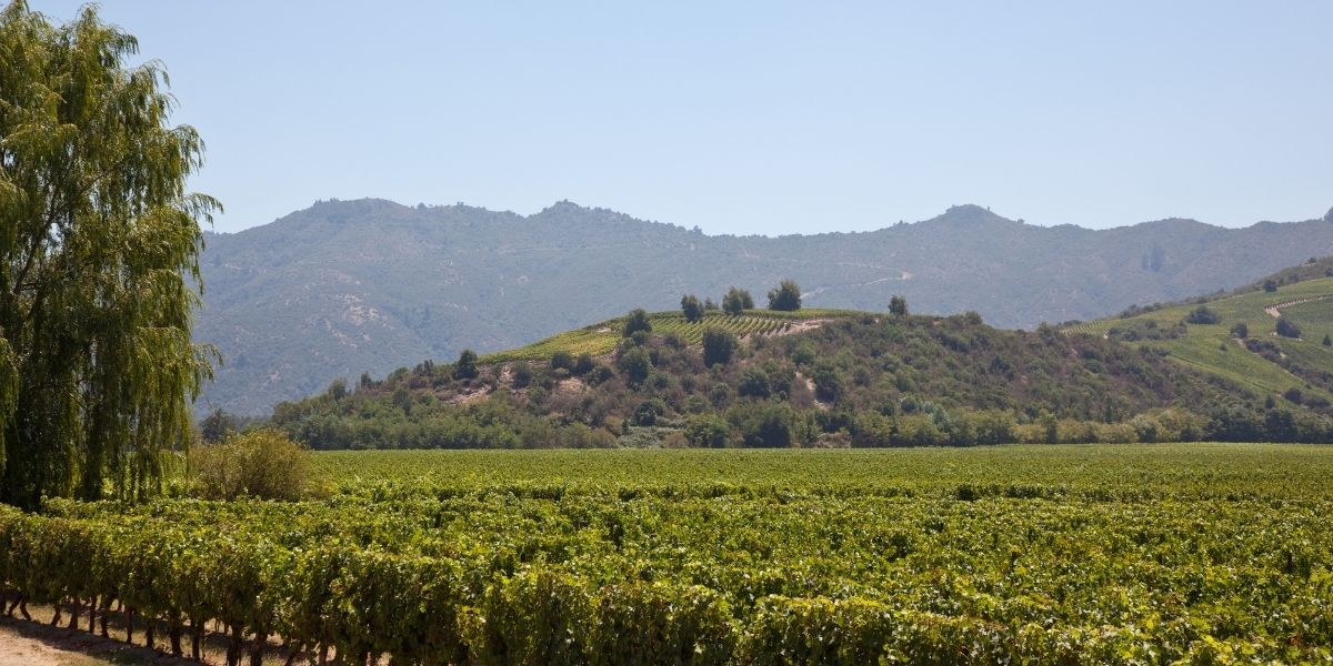The Casablanca Valley wine region, one of the best wine regions in Chile