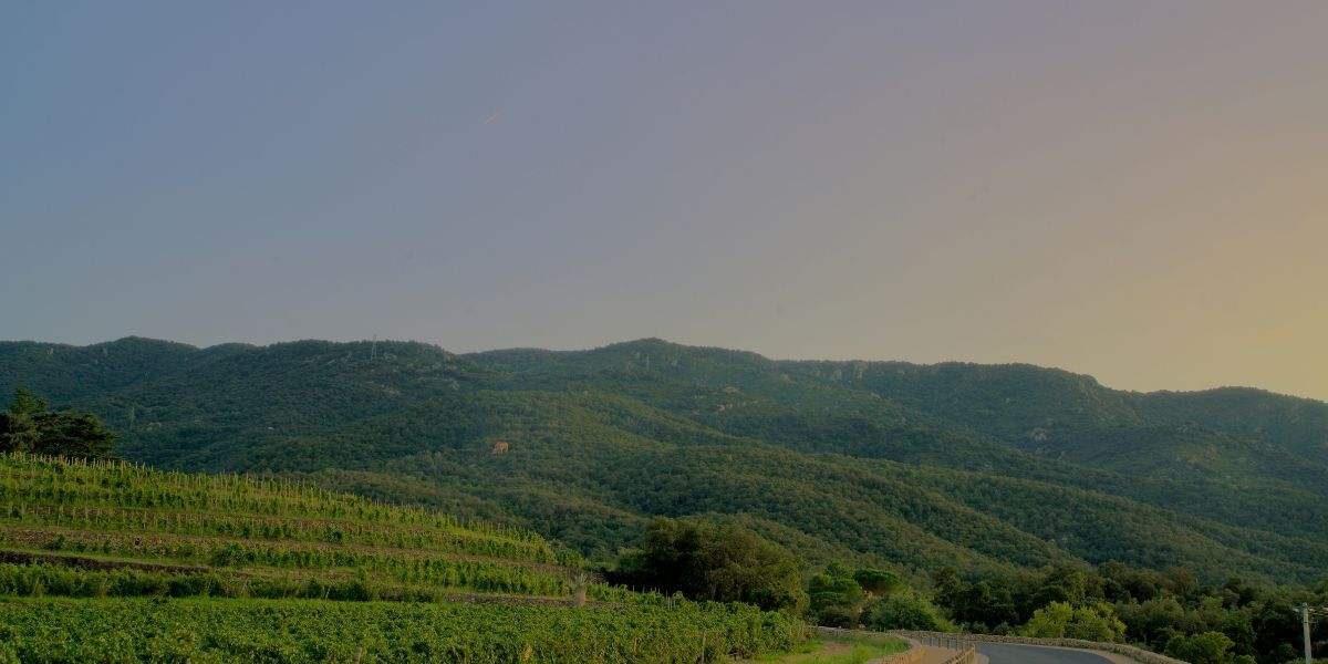 Emiliana Vineyards in Chile, where organic, biodynamic, and natural wines are produced